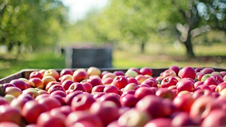 Invertir en la agricultura ¿Es buen o mal negocio?